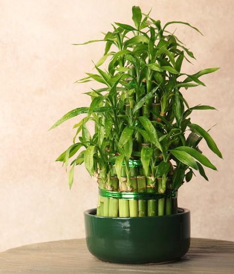 Lucky bamboo /©123RF/PICSEL