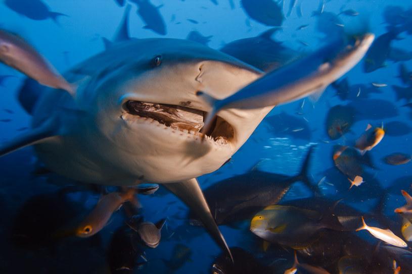 Ludzie skutecznie przyczyniają się do wymierania kolejnych organizmów żywych w morzach i oceanach /123RF/PICSEL
