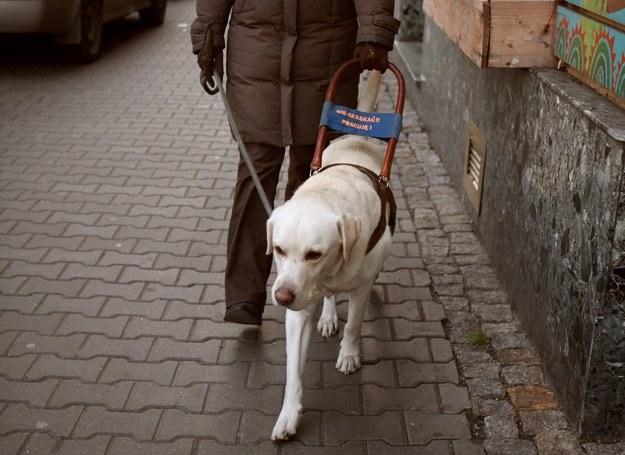 Ludzie zapominają, że pies jest w pracy, nie zważają na tabliczkę, by go nie dotykać, nie głaskać /Dogandsport