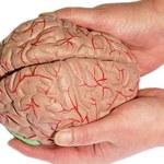 Ludzki mózg jest niezwykle plastyczny