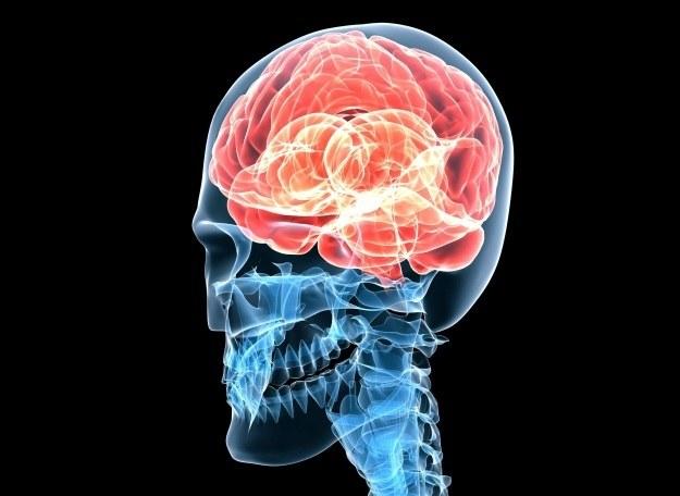 Ludzki umysł od wieków fascynował myślicieli z całego świata /123/RF PICSEL