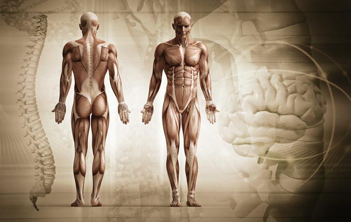 Ludzkie ciało ciekawostki /© Photogenica