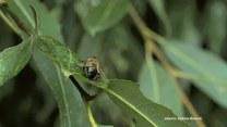Łukasz Bożycki o wpływie much na nasze życie: Przenoszą mnóstwo mikroorganizmów
