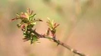 Łukasz Skop i jego eksperymenty z roślinami: Tniemy róże