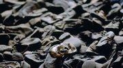 Łukasz Sroka: Dzieci żydowskie miały zginąć