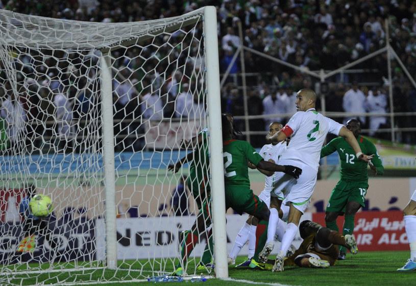 Madjid Bougherra (w białym stroju z numerem 2) strzela gola dla Algierii /AFP