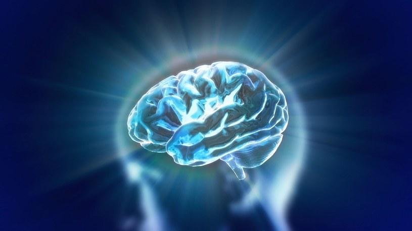 Mądrość czy inteligencja? A może jedno i drugie /123RF/PICSEL
