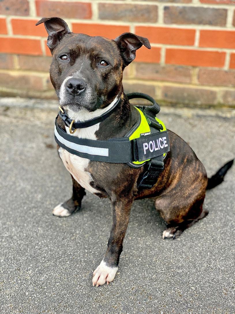Mądry pies pomaga człowiekowi, choć ten ostatni tak źle potaktował Roxy /Cover Images/East News /East News