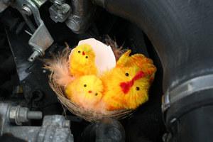 Magia żółtych kurczaczków...