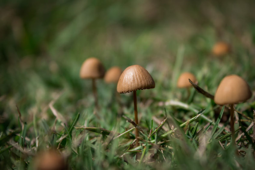 """""""Magiczne grzybki"""" leczą depresję /123RF/PICSEL"""