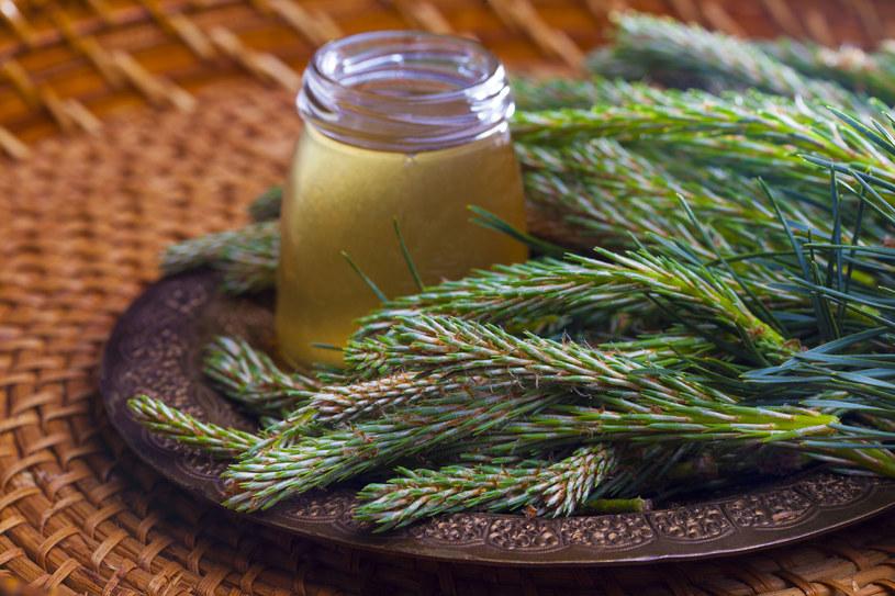Maj to idealny czas na zerwanie pędów sosny, wtedy mają najwięcej cennych dla zdrowia wartości odżywczych /123RF/PICSEL