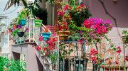 Maj w ogródku i na balkonie