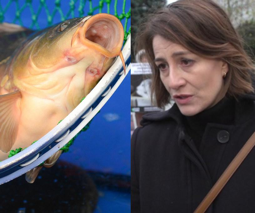Maja Ostaszewska jest przeciwna zabijaniu karpi / Adam Staśkiewicz  /East News
