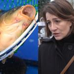 Maja Ostaszewska: Kupowanie żywych karpi jest obrzydliwe