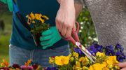 Majowe prace ogrodnicze