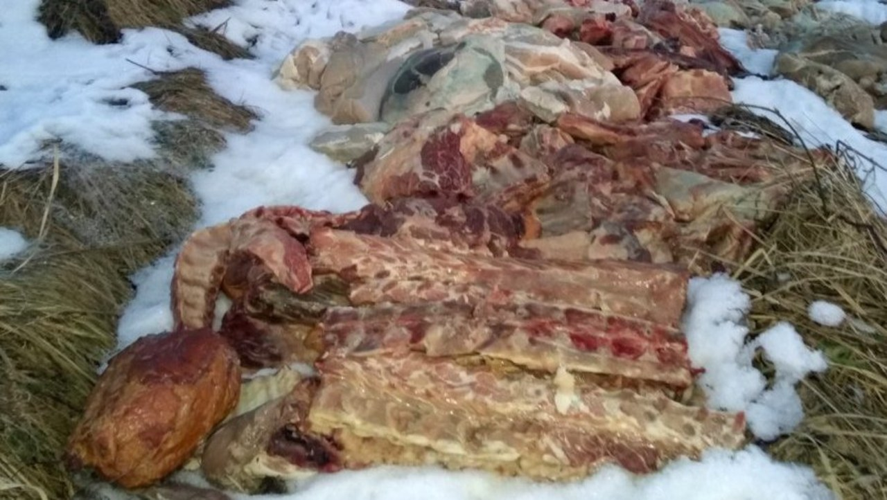 Makabryczne znalezisko w Libiążu. Ogromne ilości mięsa na polu