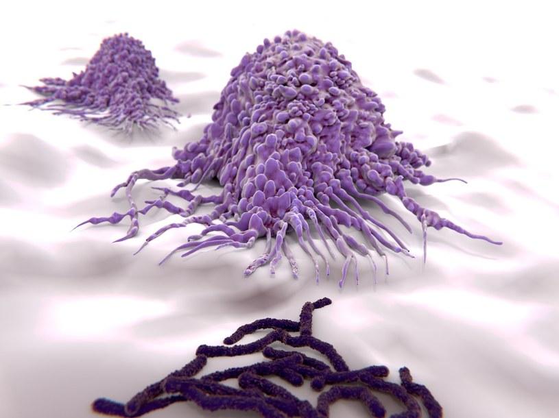 Makrofagi nie tylko pochłaniają bakterie, ale i wspomagają pracę serca /123RF/PICSEL