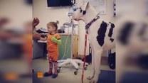 Mała dziewczynka i olbrzymi dog niemiecki bawią się bańkami mydlanymi