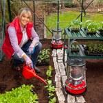 Mała grządka w ogrodzie, przydomowa szklarnia czy uprawa w doniczkach