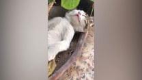 Mała kotka drzemie w ogrodowej donicy