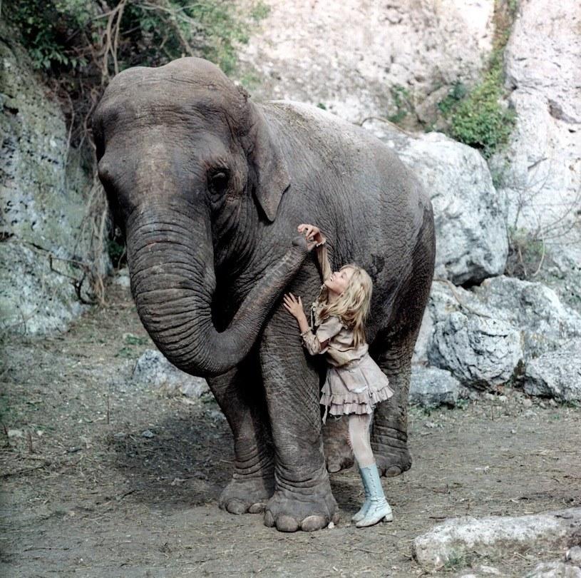 Mała Monika ze słonicą Tarą /East News