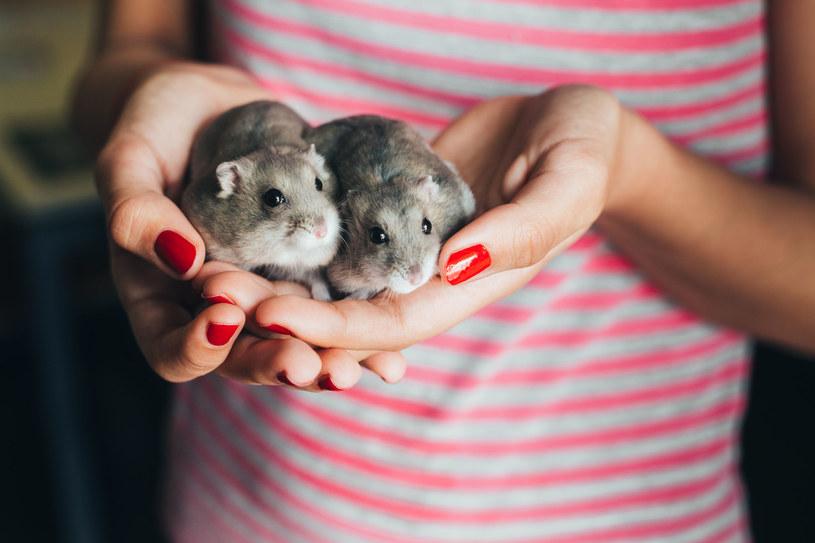 Małe zwierzęta uznajemy za niekłopotliwe i nie zadajemy sobie trudu, by poznać ich potrzeby /123RF/PICSEL