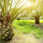 Malezja pozywa UE. Chodzi o olej palmowy
