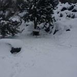 Małopolska: Trzymał psy na mrozie na krótkich łańcuchach