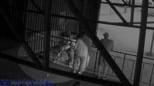 Małopolska: Zabił kota na oczach kolegów. Policji wyjaśniał, że był pijany