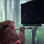 Małpa grająca w Ponga - Neuralink demonstruje swoje postępy