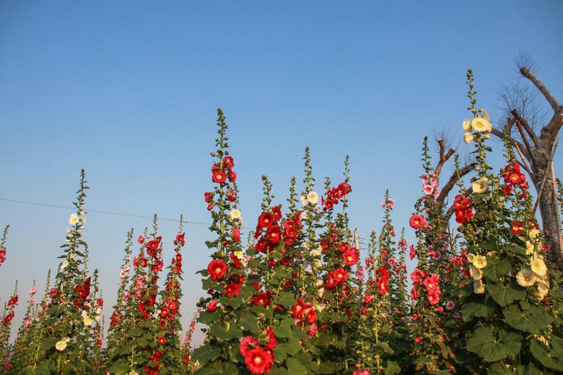 Malwy w ogrodzie /©123RF/PICSEL