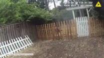 Mały jelonek utknął na ogrodzeniu. Z pomocą przyszli leśnicy