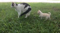 Mały psiak nie daje spokoju tej kotce
