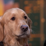 """""""Mam talent"""": Śpiewający pies podbija sieć!"""