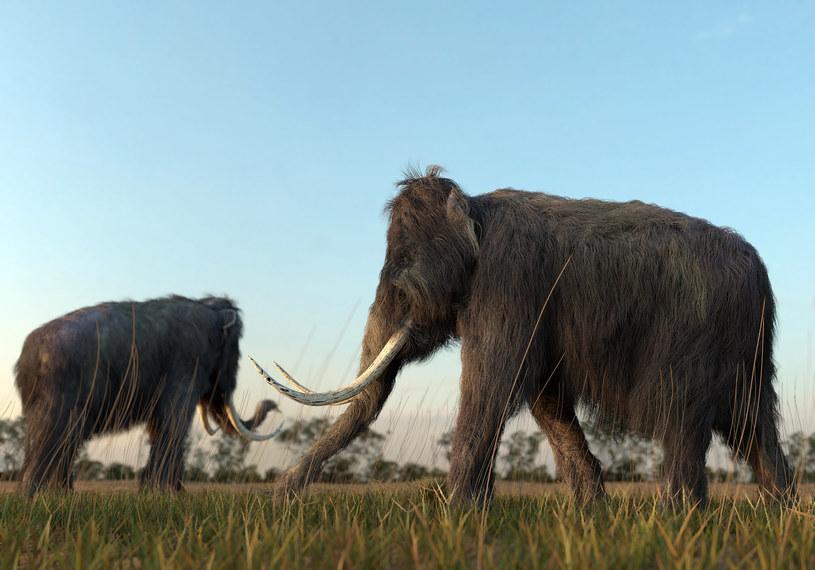 Mamuty; zdj. ilustracyjne /123RF/PICSEL