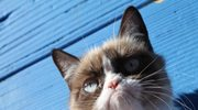 """Mamy już dość słodkich kotków! Na szczęście jest """"Zrzęda"""""""