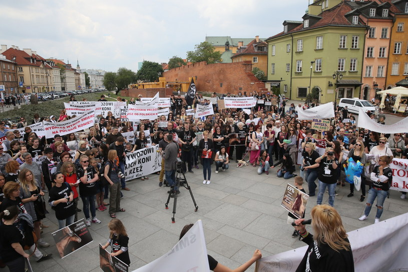 Manifestacja przeciwko wywozowi polskich koni na rzeź do Japonii 21. maja na Placu Zamkowym w Warszawie /Tomasz Gzell /PAP