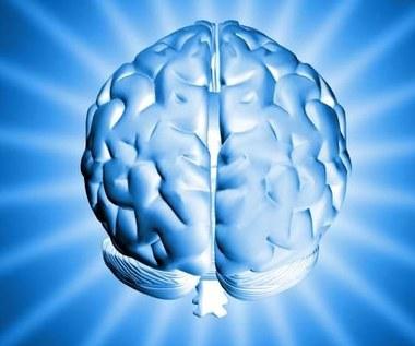 Mapa ludzkiego mózgu coraz bliżej
