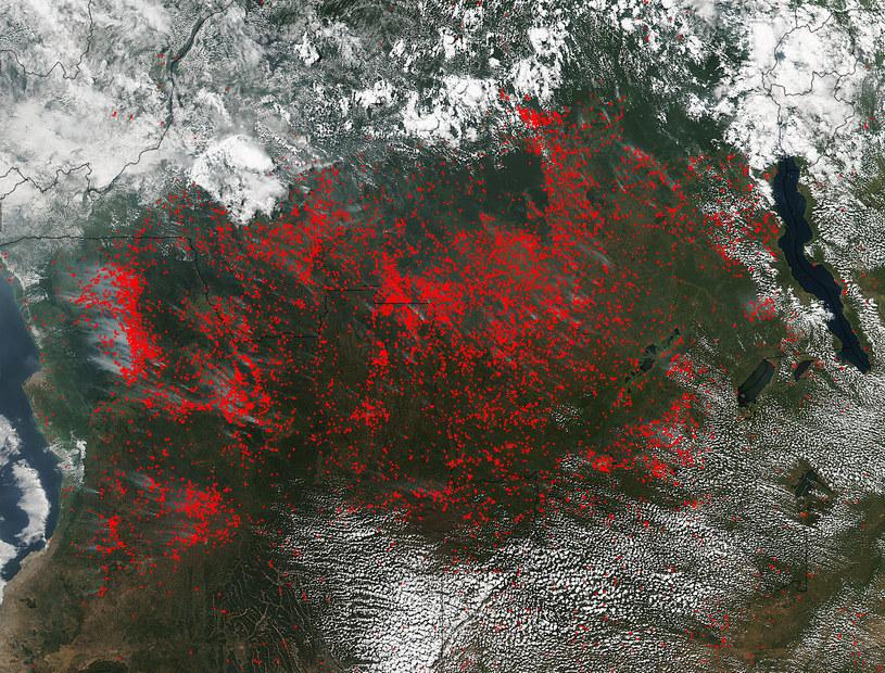 Mapa NASA ilustrująca pożary w środkowej Afryce /NASA