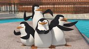"Maraton z ""Pingwinami z Madagaskaru"""