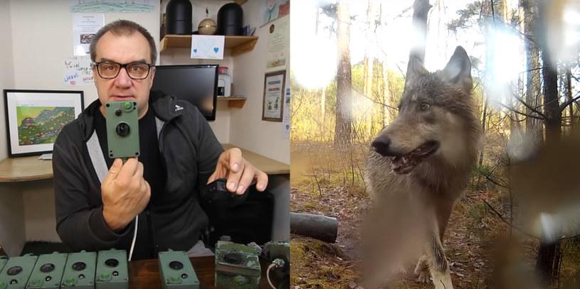 Marcin Kostrzyński zakłada w lesie fotopułapki, żeby lepiej poznać zwyczaje zwierząt /YouTube