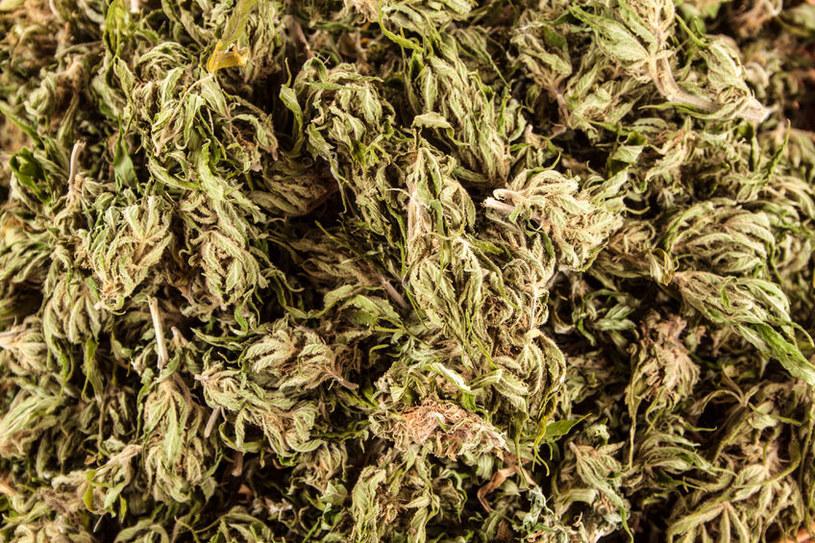 Marihuana jest bezpieczniejsza od alkoholu /123RF/PICSEL