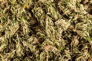 Marihuana wcale nie jest taka zła