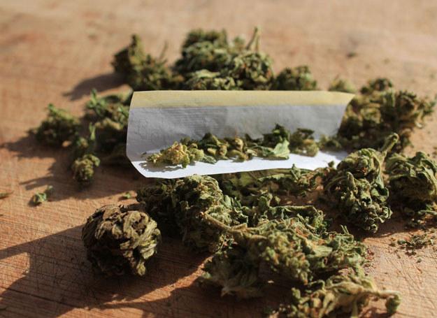 Marihuana - zdjęcie ilustracyjne /123RF/PICSEL