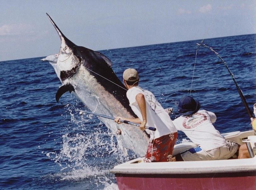 Randki internetowe oszukują, czym jest łowienie ryb