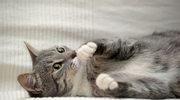  Martha Stewart: Koci manicure, ćwiczenia dla psa, wybieramy patelnię