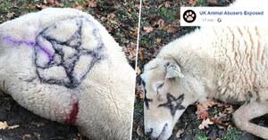 Martwa owca z pentagramem. W brytyjskim miasteczku boją się satanistów