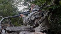Martwe drzewa i zalane wodą lasy - to skutek inwazji bobrów