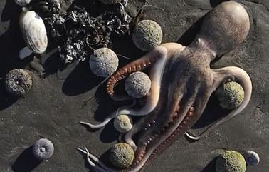 Martwe foki i ośmiornice. Katastrofa ekologiczna na Kamczatce