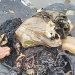 Martwy wieloryb w Indonezji. W brzuchu miał 6 kg plastiku